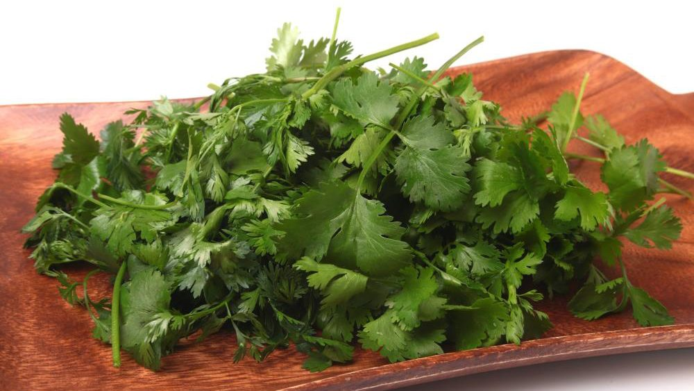Eating coriander protects your heart from damage