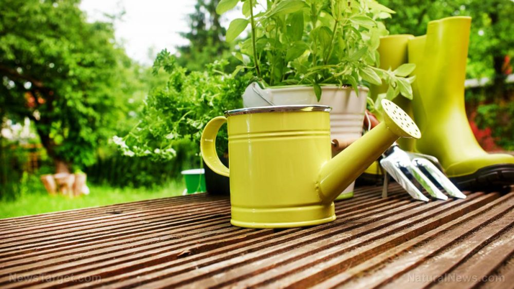 Eat healthier AND save money by growing your own food at home