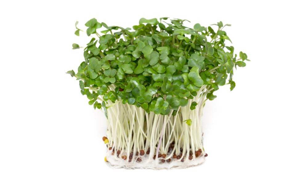 Can you balance your brain chemistry with nutrition? Compounds in broccoli sprouts found to help people with schizophrenia