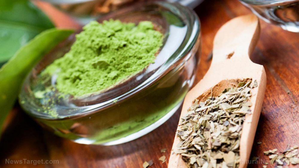 Green tea found to have practical antioxidant applications for preserving stored food