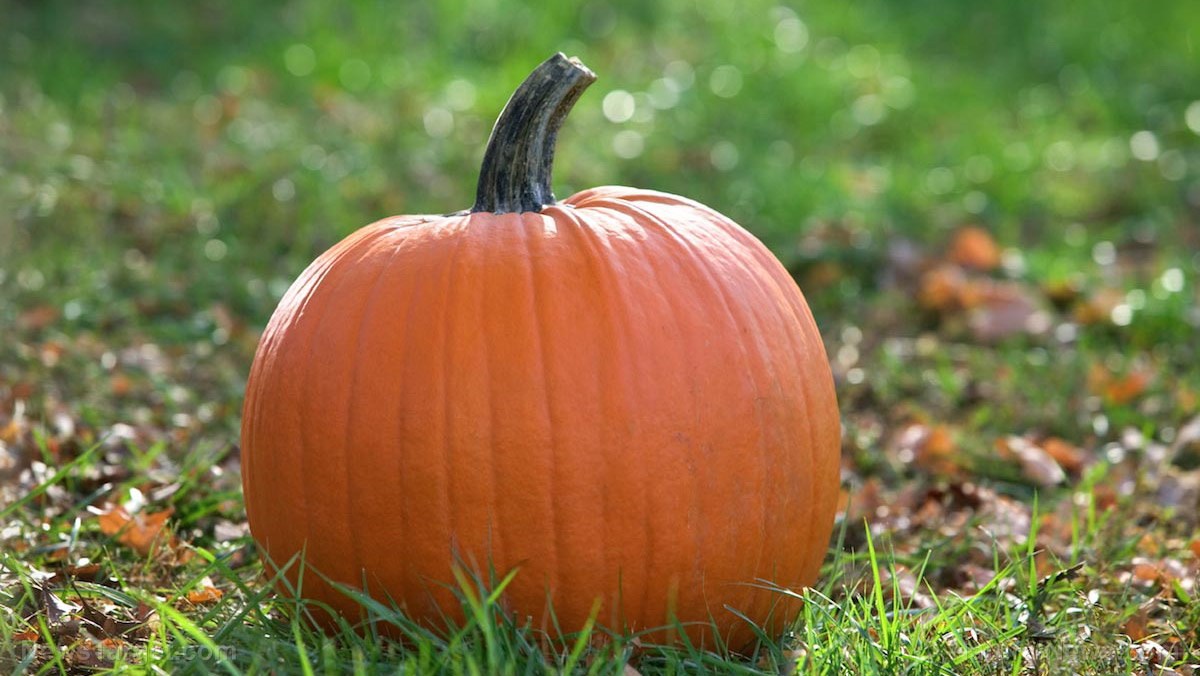 Not just a Halloween decoration: 9 Reasons why you should eat more pumpkins